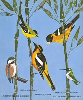 Western_Birds